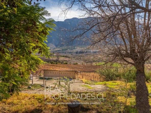 Terreno agricola viñedo en venta real propiedades 1