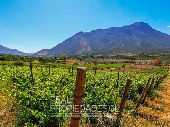 Terreno agricola viñedo en venta real propiedades 2