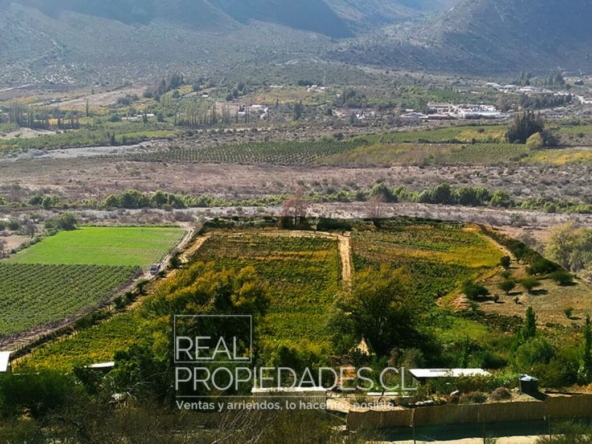 Terreno agricola viñedo en venta real propiedades 3