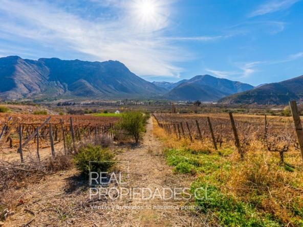 Terreno agricola viñedo en venta real propiedades 5